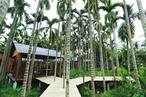椰林中的北仍村村舍